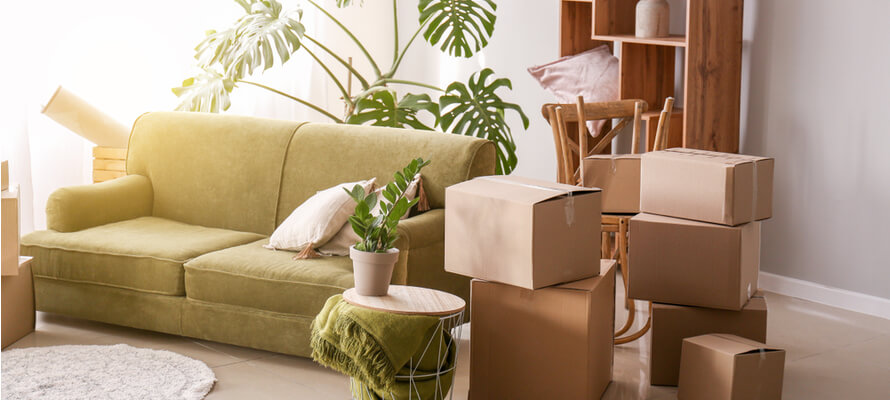 Living room with a couch, plants, and moving boxes.
